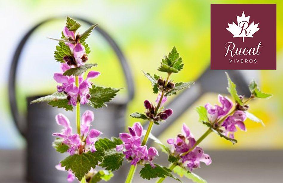 Foto de ¿Qué flores plantar esta primavera? por VIVEROS RUCAT