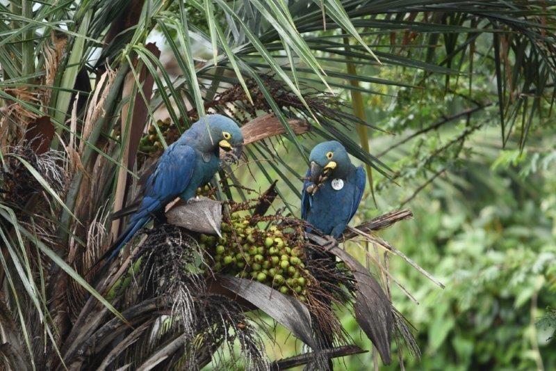 Foto de Ejemplares nacidos en Loro Parque Fundación-Tenerife,